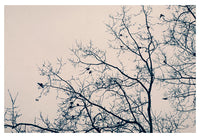 And Three Flew Away - Fine Art Photograph