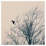 King of Trees - Fine Art Photograph