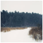 Winter Field - Fine Art Photograph