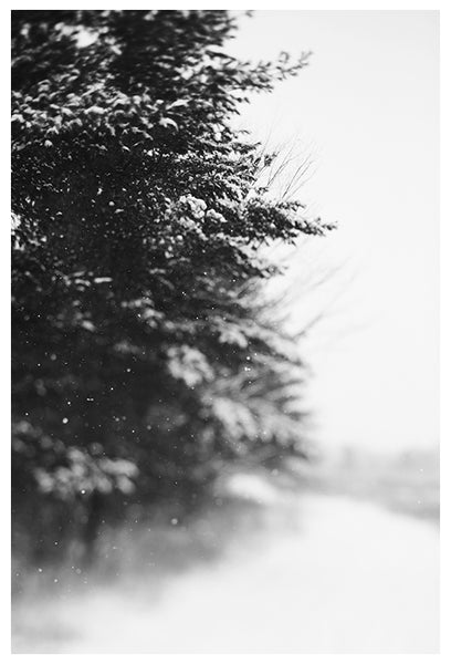 Winter Walk - Fine Art Photograph