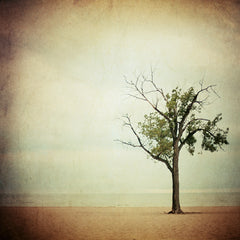 The Dreaming Tree - Fine Art Photograph
