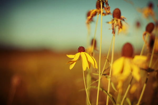 Prairie - Fine Art Photograph