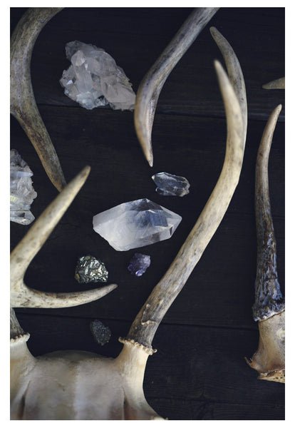 Stag and Stone - Fine Art Photograph