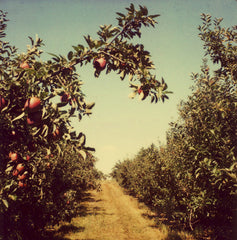 Orchard - Fine Art Photograph