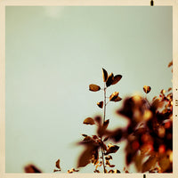 He Said Autumn - Fine Art Photograph
