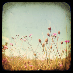 Where The Purple Thistle Grows - Fine Art Photograph