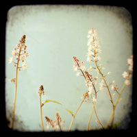 Fairyland - Fine Art Photograph