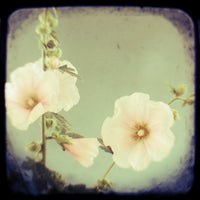 Blush - Fine Art Photograph