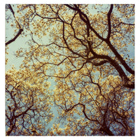 Under The Canopy - Fine Art Photograph