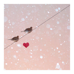 Lovebirds - Fine Art Photograph
