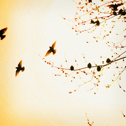 Flock - Fine Art Photograph