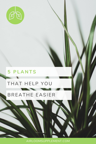 Plants to put in your home or office for cleaner air | airloomsupplement.com