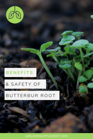 Benefits of Butterbur Root Extract | airloomsupplement.com