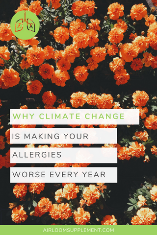 Allergies are getting worse. Here's why | airloomsupplement.com