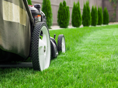 Top Four Tips for Your Summer Lawn