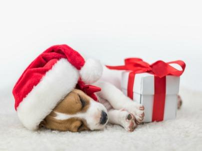 5 Pet-icularly Good Gifts for the Animal You Love