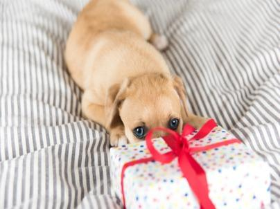 11 Gift Ideas for Dog Owners That Keep on Giving