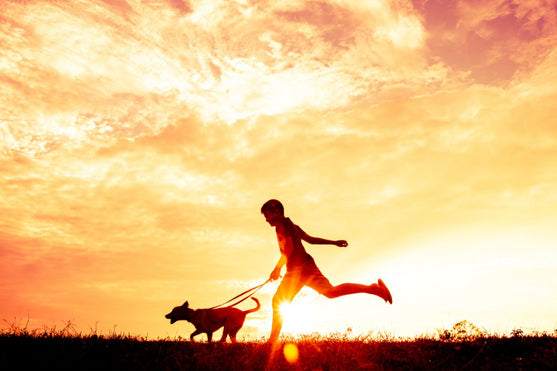 5 Fun, Dog-Friendly Activities for You & Your Dog This Summer