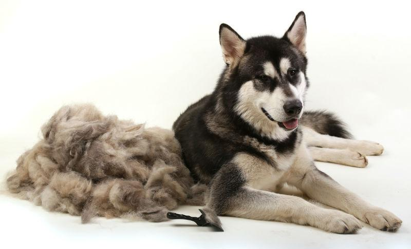 Help for shedding pets