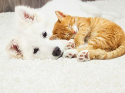 3 Smart Ways to Help Dogs and Cats Get Along