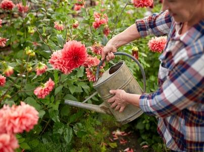 The Top 3 Mistakes New Gardeners Make