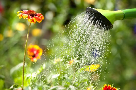 5 Easy Ways to Save Water While You Garden