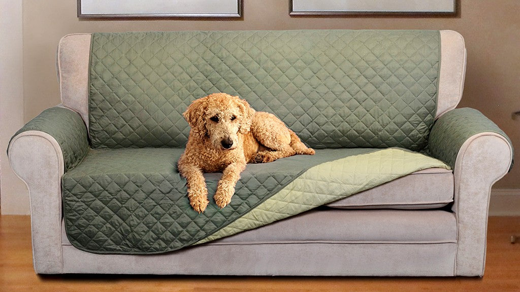 Cover your furniture to protect it from dog fur!