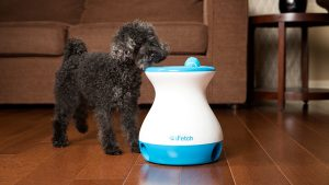 iFetch Frenzy lets your small pups play fetch by themselves!