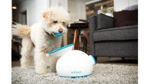 Fido can keep himself entertained with iFetch!