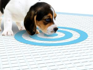 Bullseye pee pads keep your puppy clean inside!