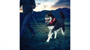 Walk your dog safely at night with Nite Ize LED Dog Collar