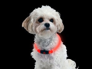 Nite Ize Nitehowl LED Safety Necklace keeps pooches safe.