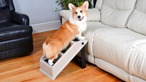 Up and Under Doggy Steps gives your pup a step up