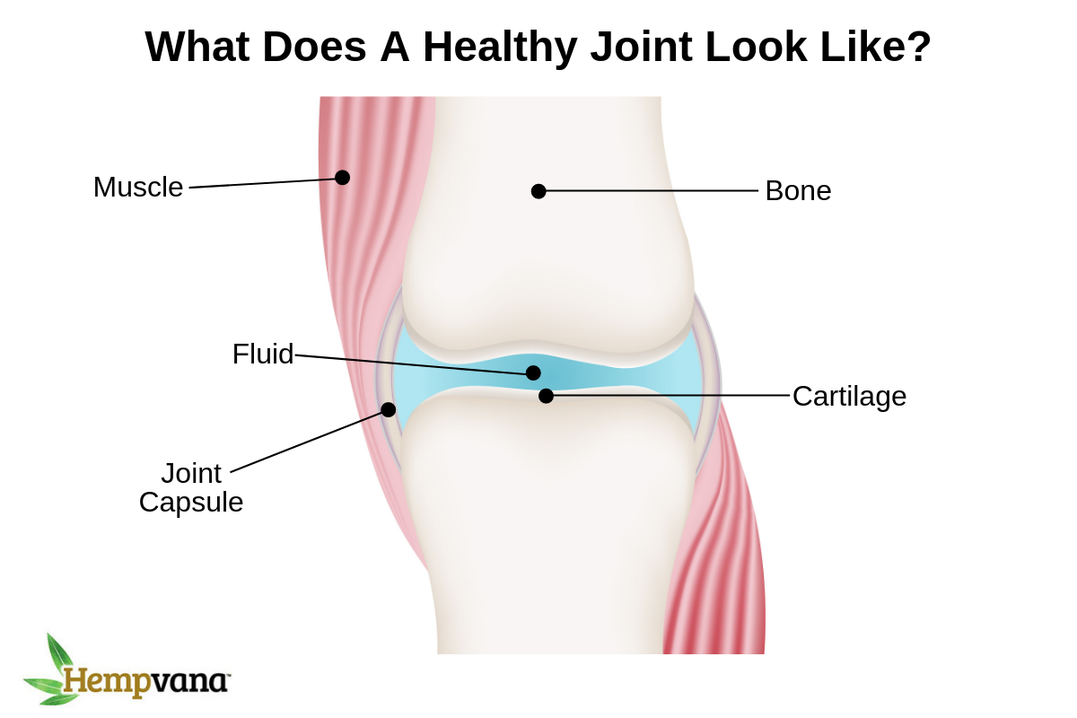 joint anatomy