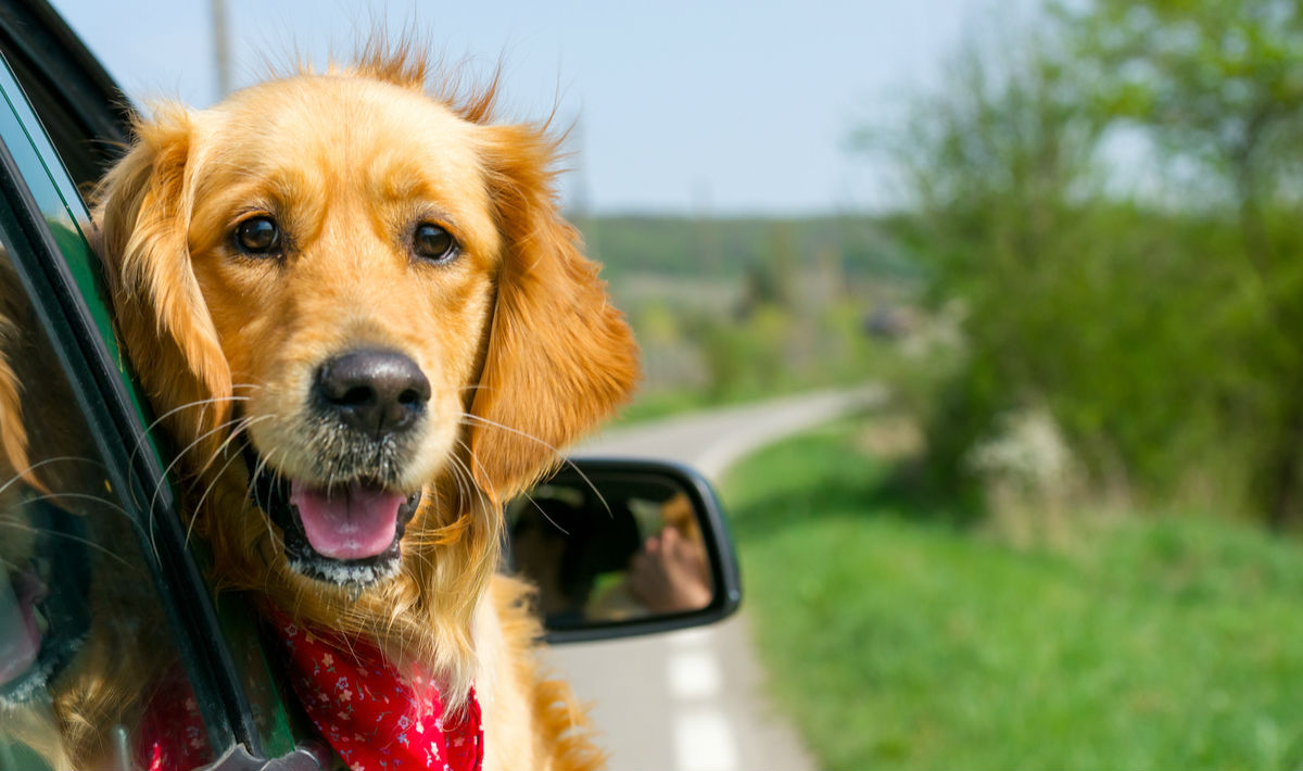 Take A Road Trip With Your Dog