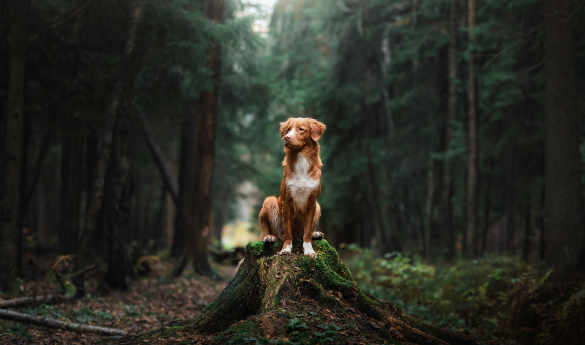 Hike With Your Dog On Dog-Friendly Hiking Trails