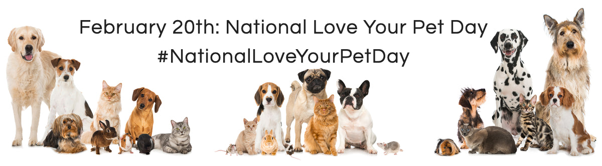 National Love Your Pet Day Cats, Dogs, Bunnies, And Rats