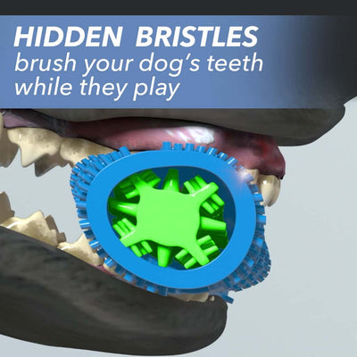 "Closeup of a dog's mouth chewing Chewbrush, includes the text ""Hidden bristles brush your dog's teeth while they play"""