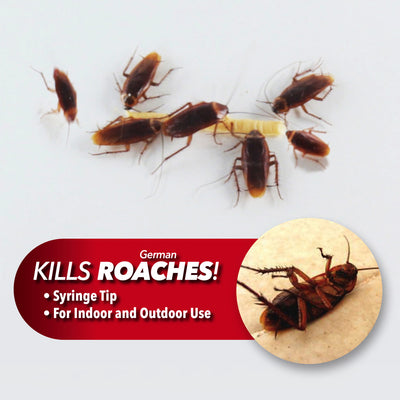 Roaches eating Roach Doctor and one showing dead