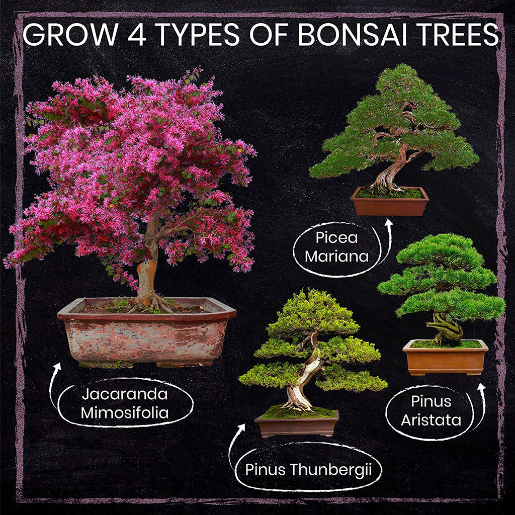 4 types of bonsai trees