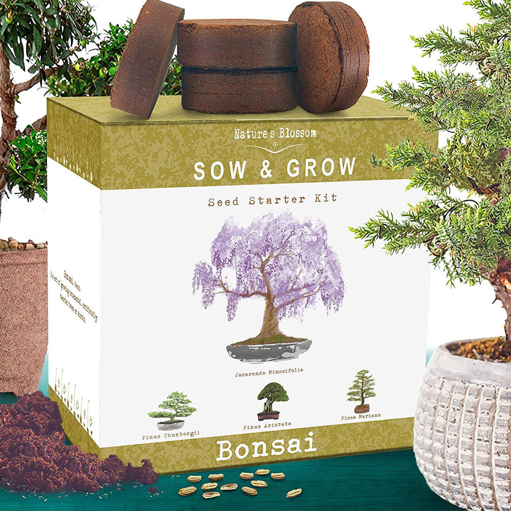 grow your own bonsai tree box