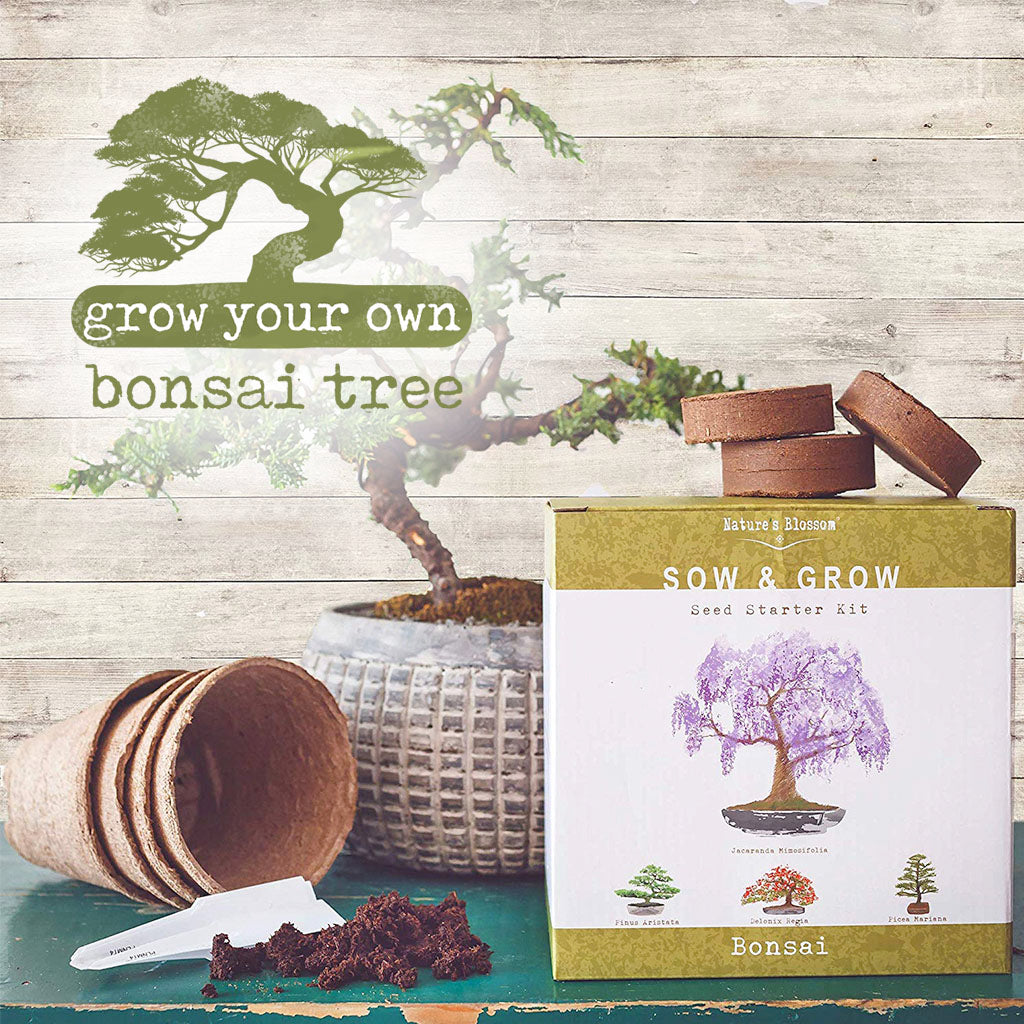 grown your own bonsai tree set