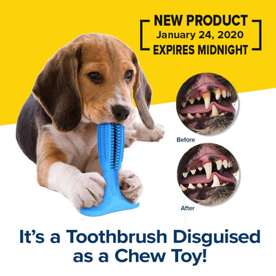 dog chewing  on blue dog toothbrush in front of yellow and white background with text and 2 images of dog teeth
