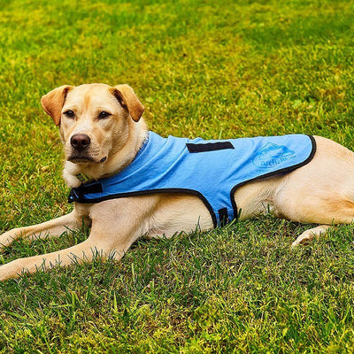 ArcticBlu Dog Cooling Coat image from BulbHead