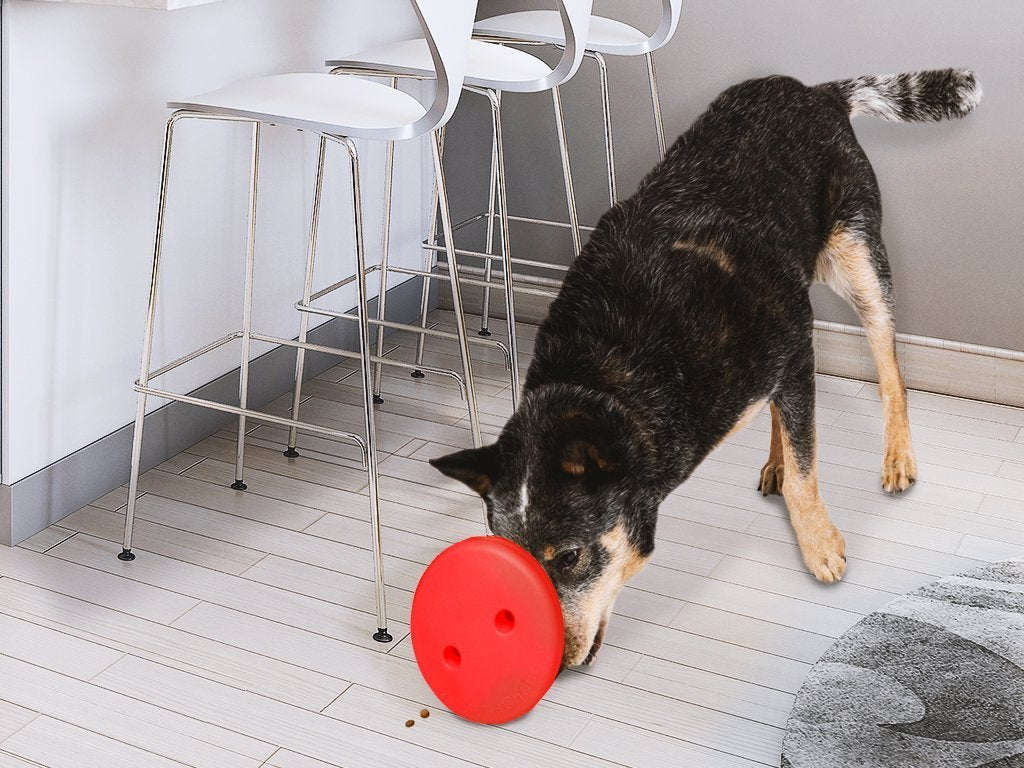 GameChanger - The Ultimate Toy for Dogs image from BulbHead