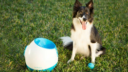 Ifetch Too Ball Launcher Dog Toy image from BulbHead