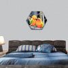 Colourful parrot bird kissing on the perch hexagonal canvas wall art