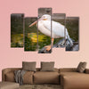 White Pelican, Pelecanus onocrotalus, in zoo Side view Multi panel canvas wall art