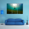 A Young woman dives down to explore the se grass bad in Honduras Multi panel canvas wall art