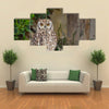 Spotted Eagle-Owl Bubo africanus Multi Panel Canvas Wall Art